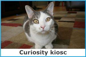 Curiosity kiosk image link